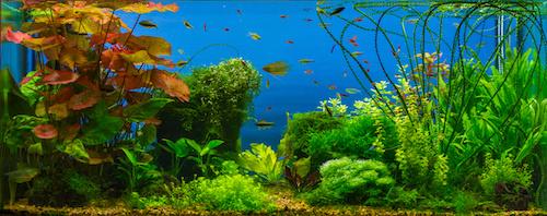 Aquarium auf Rechnung kaufen