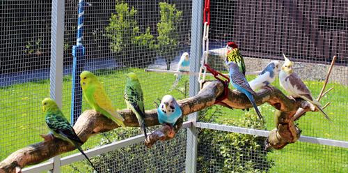 Vogelvoliere auf Rechnung kaufen