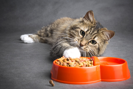 Katzenfutter auf Rechnung bestellen